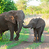 Two Elephant Walk