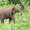 Frisky Baby Elephant