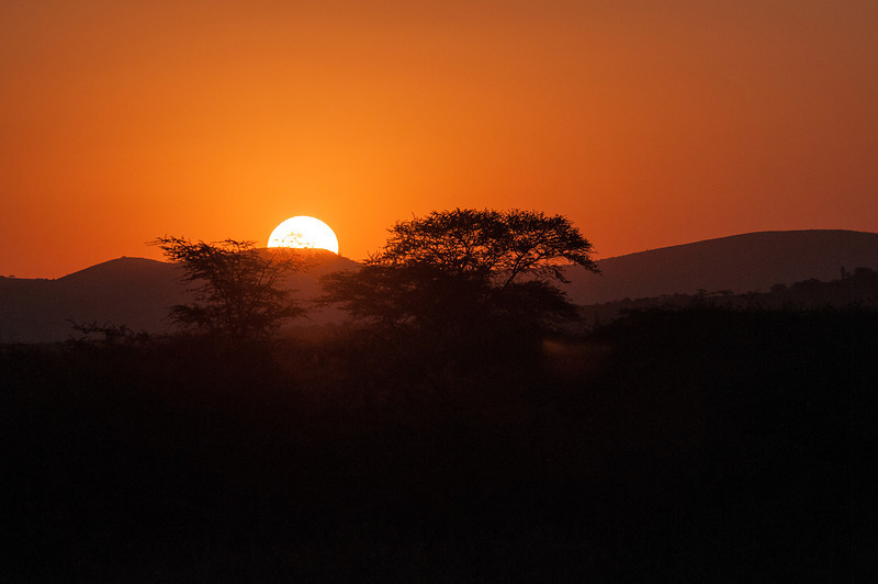 Acacia Sunset_