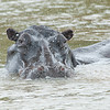 Hippo shower