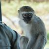 Bob the monkey 3_
