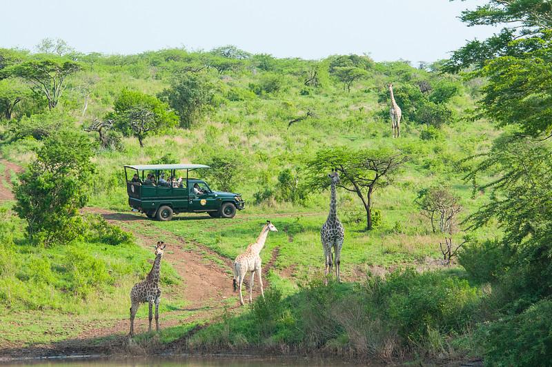 Giraffe Watchers