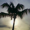 Palm tree spotlight