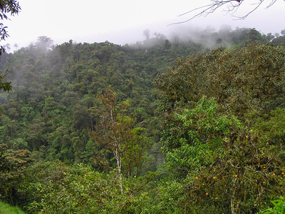 Western Flank Cloud Forest, Ecuador