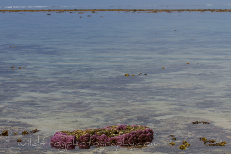 exposed coral at low water