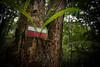 Trail marker, Grande Randonnée 1, Parc Naturel de la Rivière Bleue, Grande Terre, New Caledonia.