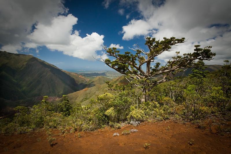 Mont Poudehoume, Grande Randonnée 1, Grande Terre, New Caledonia.