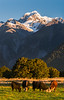 Fading Light on Mount Tasman I, Lake Matheson area, South Island.