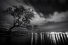 """Alone with an Icon"" II<br /> <br /> Wanaka Tree, Lake Wanaka, South Island."