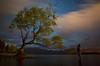 """Alone with an Icon"" III<br /> <br /> Wanaka Tree, Lake Wanaka, South Island."
