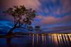 """""""Alone with an Icon"""" I<br /> <br /> Wanaka Tree, Lake Wanaka, South Island."""
