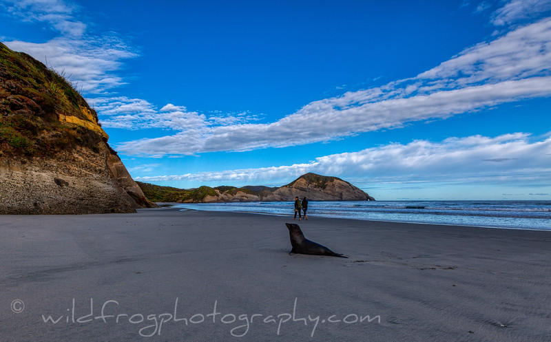 Walkers and Seal on Wharaiki Beach NZ