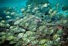 """""""Utuko Bliss"""" III, Utuko Reef, Alofi, Niue."""