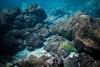 """Utuko Bliss"" V, Utuko Reef, Alofi, Niue."