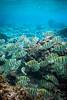 """""""Utuko Bliss"""" VI, Utuko Reef, Alofi, Niue."""
