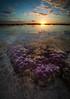 """The Beauty Beneath"" III, Matavai, Niue."