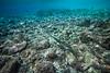 """Between Worlds"" VII, Avatele Bay, Niue."