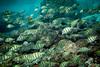 """""""Utuko Bliss"""" IV, Utuko Reef, Alofi, Niue."""
