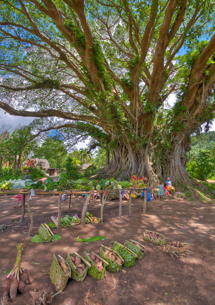 Market under the giant banyan tree, Tanna, Vanuatu. HDR.