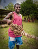 Fresh kava roots from the market, Tanna, Vanuatu.