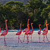 Greater Flamiagos on the salt flats - Galapagos Islands