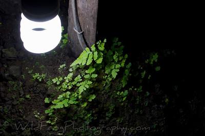 Ferns growing around a light inside a Lava tube