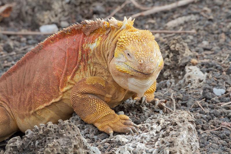 Land Galapagos