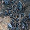 Galapagos island snake