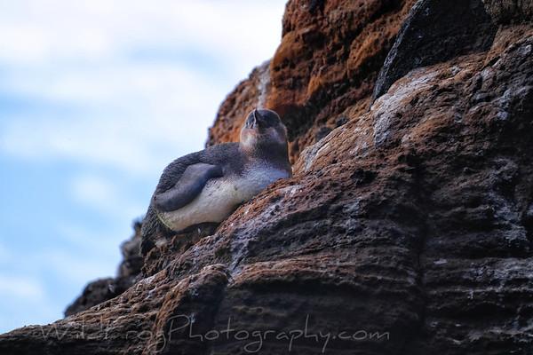 Penguin taking in the morning sun