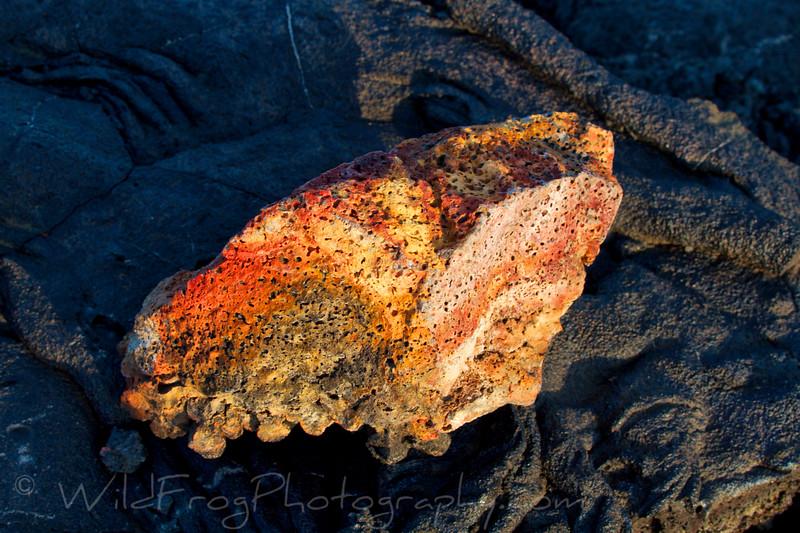 Sun on a piece of lava