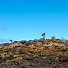 Lava landscapes