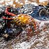 Sallylight foot crab