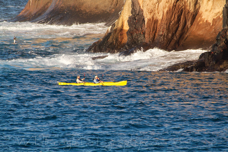 Kayaking near Wizard Hill, Blue footed booby diving in back ground