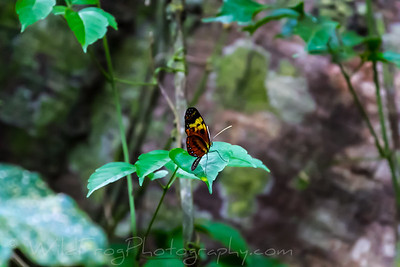 Butterfly sitting on leaf