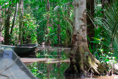 little creek out to Lake Sandoval -Amazon