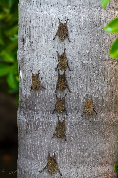 Bats resting at the base of a palm tree
