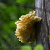 Fungus growing on the side of a tree