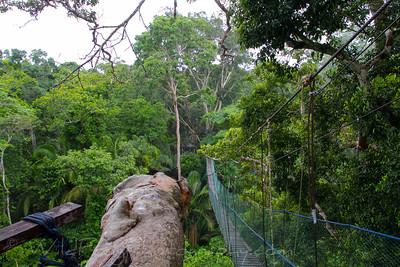 Walk way high up in the rainforest