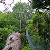 Walk way high up in the rainforest