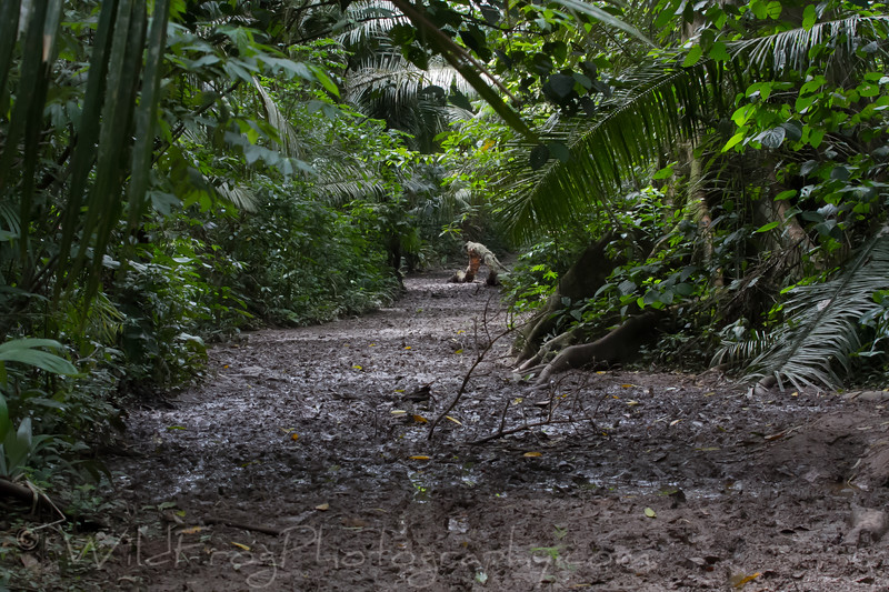 the 6km mud trail to Lake Sandoval