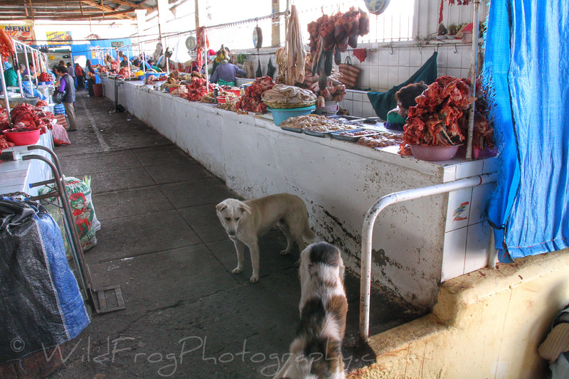 Dogs at meat market