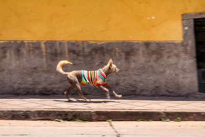Dog on the town,looking good