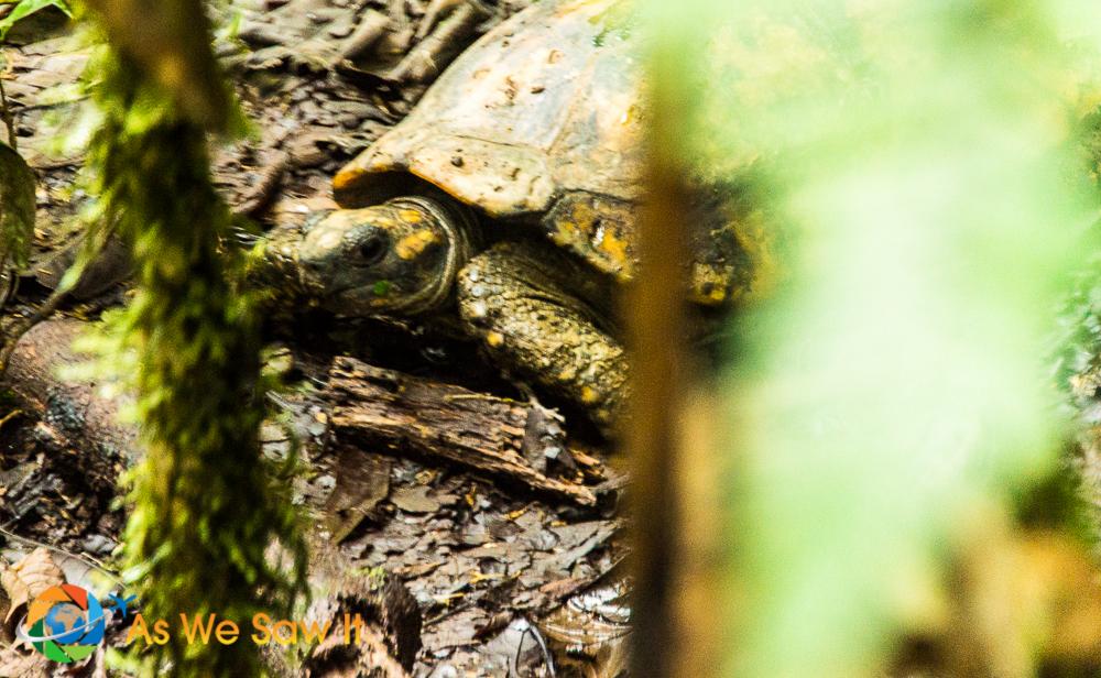 Land turtle at AmaZOOnico animal rescue shelter