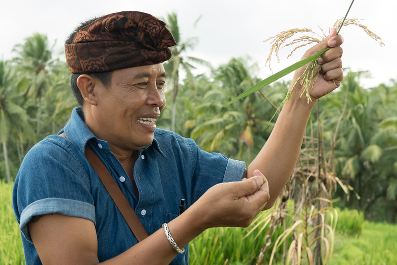Wayan holding up a stalk of rice in the rice field in Bali