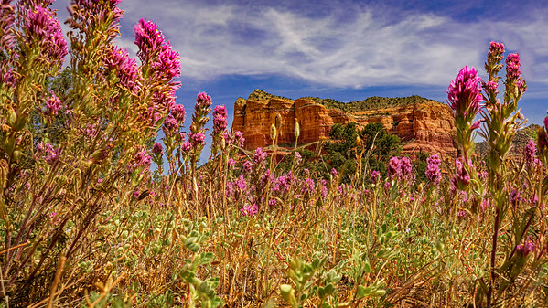 Owls Clover and Red Rocks; #1855a