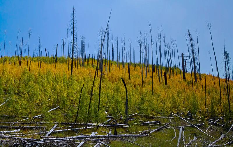 Forest burn near Grand Canyon National Park, #0550