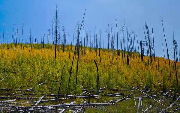 Forest burn near Grand Canyon National Park, #0550