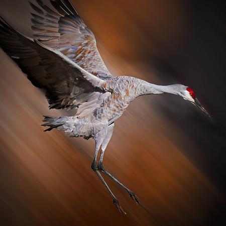 Landing Crane, #1949