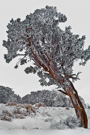 Winter in the Grand Canyon - Arizona: #0317