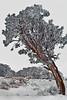 Winter in the Grand Canyon - Arizona: #0317